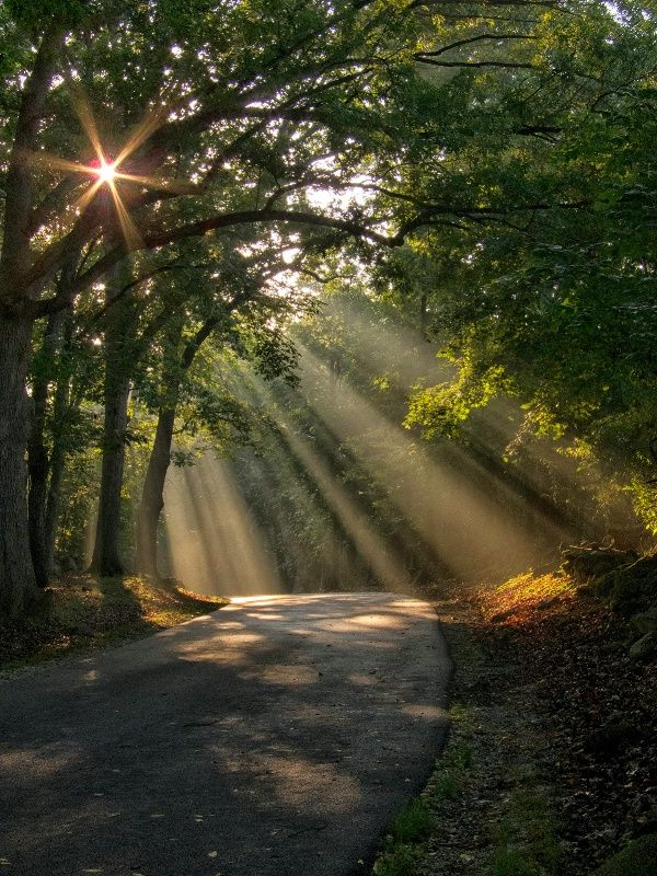On The Way Home: Sun Ray, Paths, Country Roads, Interiors Design, Beautiful, Trees, Places, Sunray, Mornings Lights