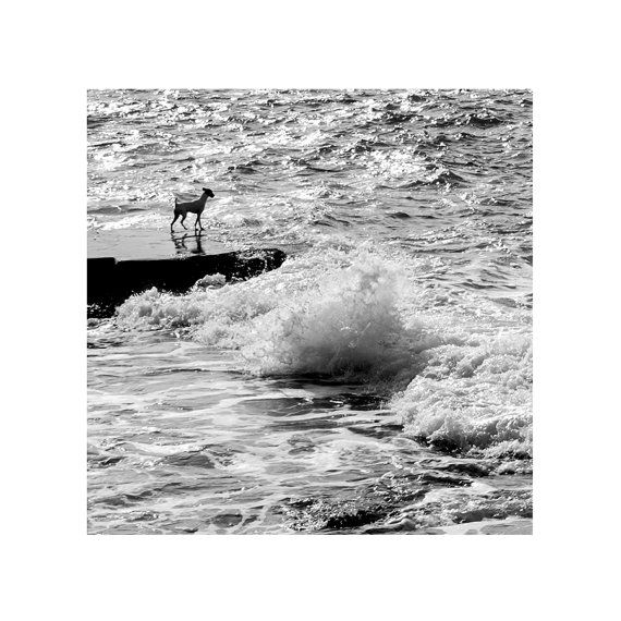 Dog photograph / sea ripples waves / black and white fine art print / home decor wallart / summer beach picture/ Gift for dog lovers /