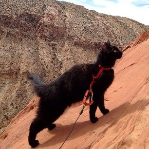 Millie's for sure a special kind of cat. Not just any kitty can go on these adventures.   Meet Millie, The Adorably Brave Rock Climbing Cat