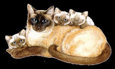 We are siamese if you please :3