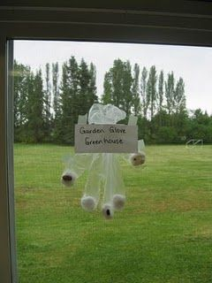 Greenhouse Garden Gloves-   Wet cotton balls, squeeze out the extra water than drop one wet ball into each finger of the glove.   Then drop a seed in each finger space with the wet cotton ball.  We used bean seeds.  After you have all the seeds in place, close the top of the glove and tape it on to a window for the sun and it's warmth to help it grow.