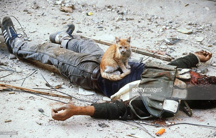 A dead member of the pro-Syrian Amal militia, the first political organization of Lebanon's Shi'ite Muslims, is guarded by his cat during the break in the fighting against Palestine Liberation Organization (PLO) fighters in Bourj el-Barajneh refugee camp 29 May 1985 in Beirut. In May and June 1985, the Shi'ite Amal militia, and with the assistance of the largely Shi'ite Sixth Brigade of the Lebanese Army, Syria renewed its attempt to prevent PLO leader Arafat from re-establishing a…