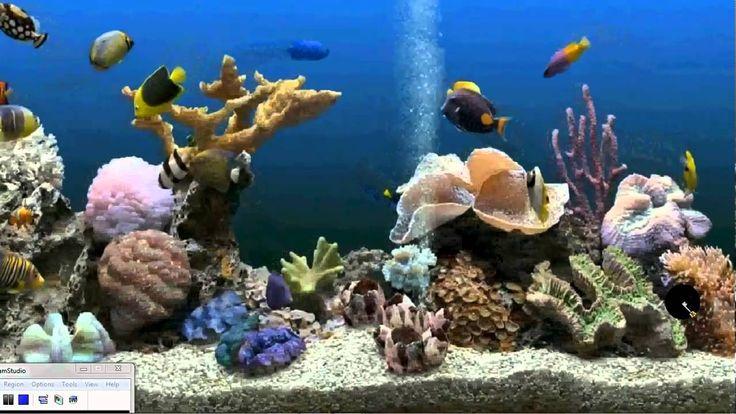 Fish Tank Moving Desktop Backgrounds | maxresdefault.jpg