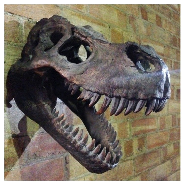 T rex skull head metal wall art dinosaur wall hanging T rex trophy heads in Tyrannosaurus rex skull head for home or offices in the uk