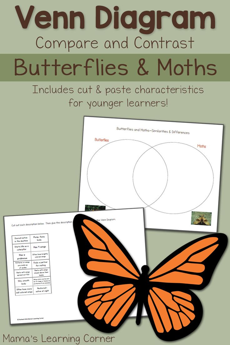 Write Your Name Worksheet Pdf Best  Venn Diagram Worksheet Ideas On Pinterest  Venn Diagram  Growth And Development Worksheets Excel with Concave Mirror Ray Diagram Worksheet Pdf Moths And Butterflies Venn Diagram Worksheet Complementary Angles Worksheets Excel
