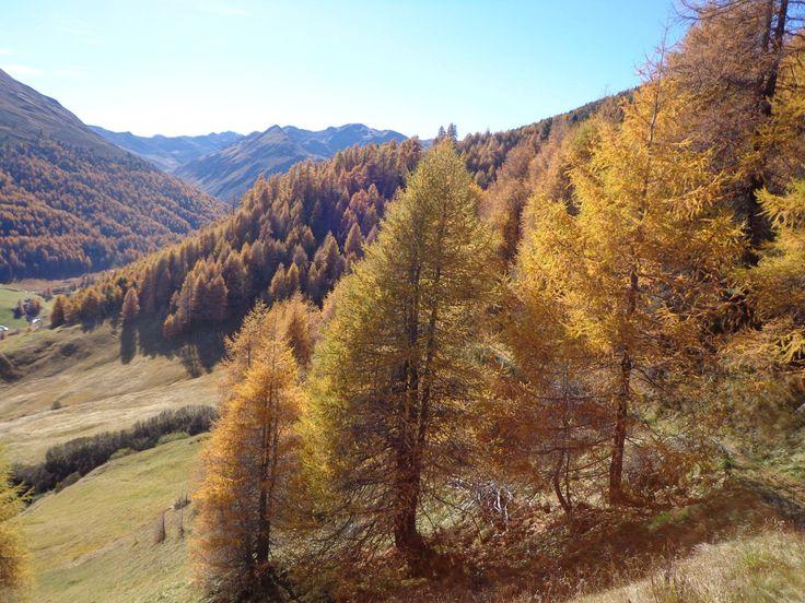 Der goldene Herbst und sein wunderbares Farbenkleid