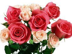 rode en roze roos boeket