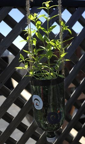 DIY soda bottle hanging garden. Maybe for planting bee and butterfly attracting flowers.