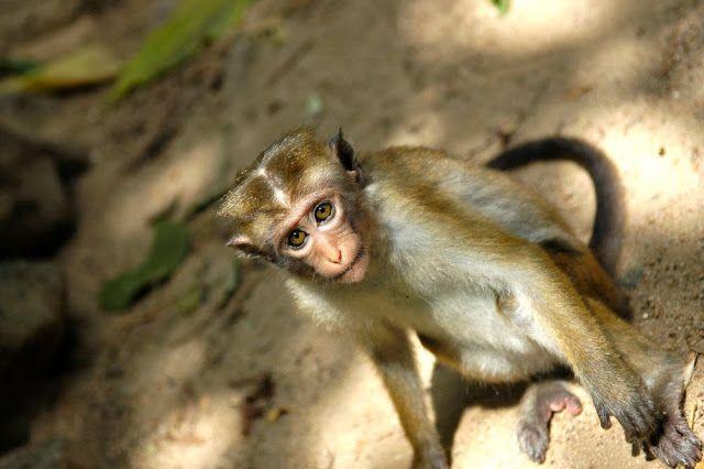 Where to find monkeys - and time to think - in Sri Lanka   #travel #travelwithkids #monkey #wildlife #srilanka #asia #temple #buddhism