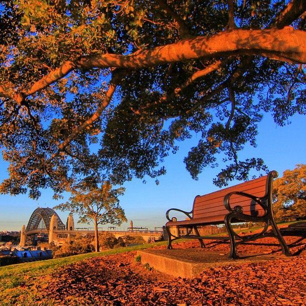 Observatory Hill, Sydney #Australia   by junyi0812 (instagram)