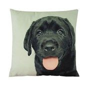 Black Labrador Velvet Look Cushion  Website Coming soon...