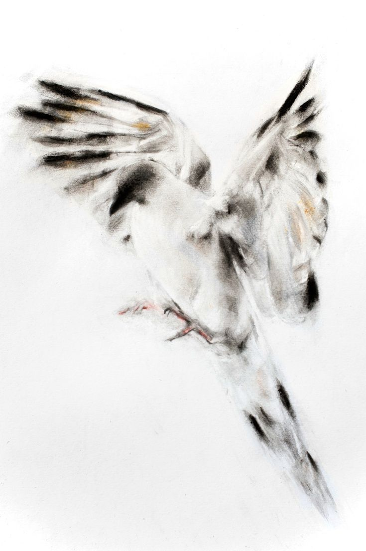 ARTFINDER: Dove by Kellas Campbell - First I sketched the bird with a 2H pencil and then I ground my ink stick and mixed it with water to make a light grey and applied that with a calligraphy br...