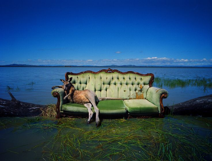 Roo on Sofa / Dean Sewell