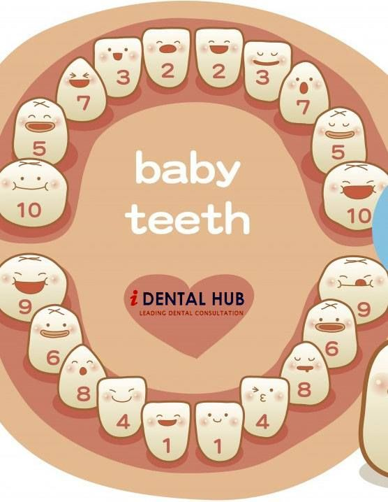 25 best ideas about Baby Teeth Order – Baby Teeth Chart