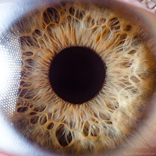 human eye, macro, by Suren Manvelyan