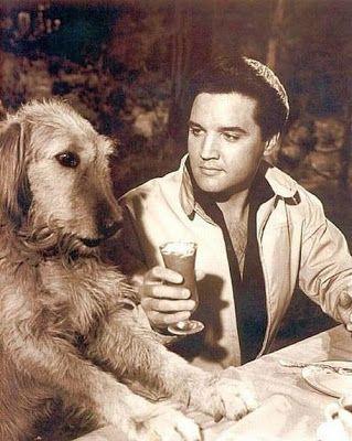 Elvis Presley zeldzame foto's - 120 Fotos | Nieuwsgierig, Grappige Foto's / Foto....................VRIENDEN.....lbxxx.