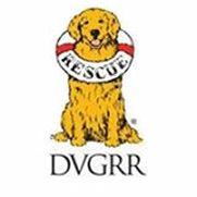 DVGRR rescues displaced Golden Retrievers and places them for adoption to find a good home. Please checkout the availablle dogs. [CLICK HERE for all available dogs at DVGG!]