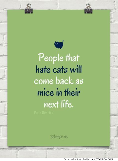People that hate cats - quote about cats (more @ kittycrew.com)
