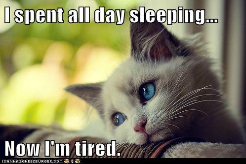 I spent all day sleeping...: Catproblem, Kitty Cat, Pet, Cat Problems, Funny Stuff, So True, Blue Eye, Even, Animal