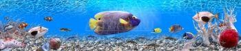 Подводный мир, Фотообои 26606