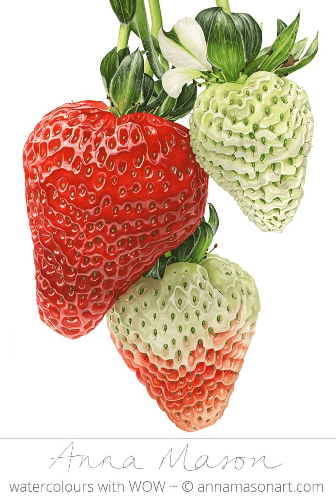 "Strawberries © 2009 ~ annamasonart.com ~ 46 x 61 cm (18"" x 24"")"