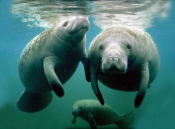 Et un autre article sur les mammifères marins