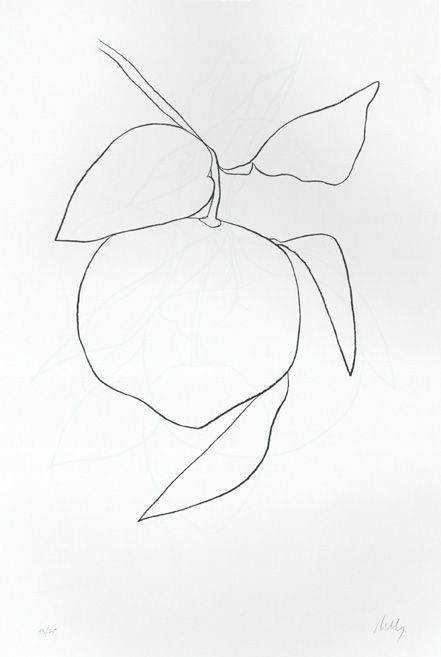 and another lovely Ellsworth Kelly plant drawing