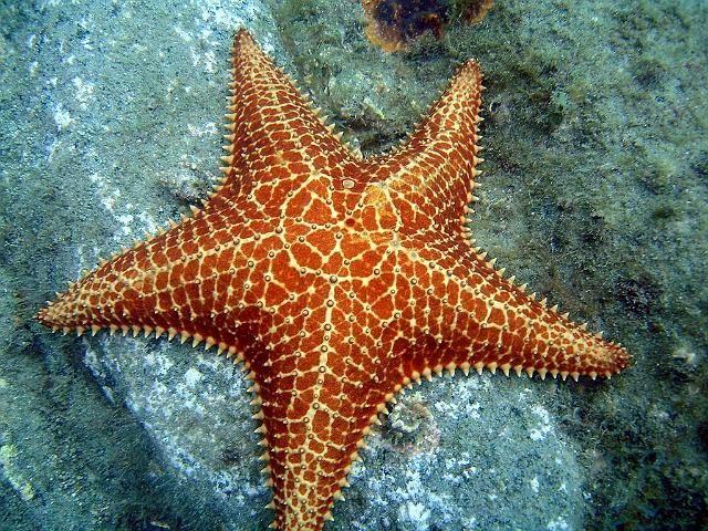 Mundo da Biologia Marinha: Setembro 2014