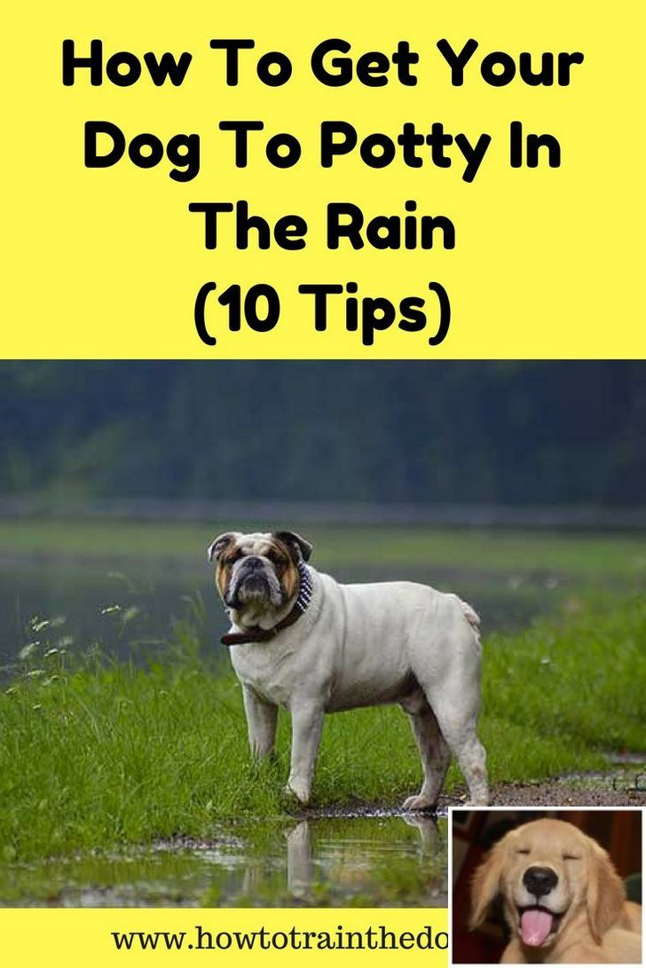 Stop Dog Jumping And How To Keep My Dog Off The Couch Check Pin