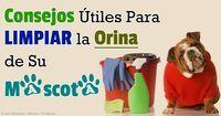 Limpieza y Eliminación de Olor de Orina de Mascotas