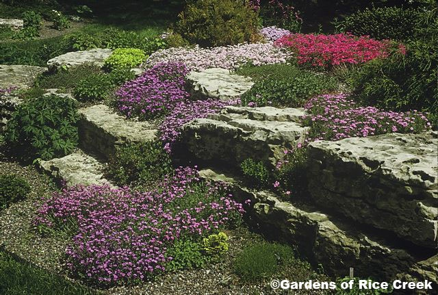 Rock Wall Garden Designs rock walls hosta and lamium in the foreground Image Detail For Rock Garden Landscaping Minnesota Mn Landscape Waterfalls Pond Design Backyard Landscaping Pinterest Gardens Ground Level And The