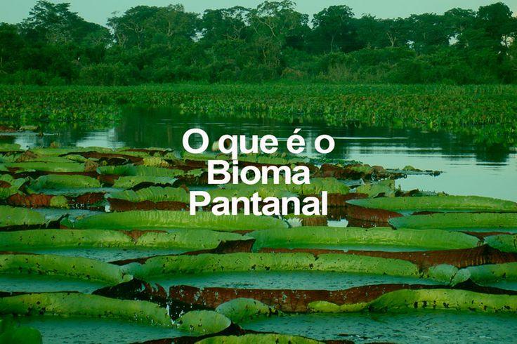 Imagine uma salada, mas seus ingredientes não são frutas ou verduras, são biomas inteiros. Misture-os e acrescente bastante água. Esta é a receita do Pantanal: um pouco de Amazônia, de Cerrado, uma parte de Mata Atlântica, outra do Chaco boliviano. Considerada a maior planície de inundação contínua do planeta, é influenciada por rios que drenam a bacia do Alto Paraguai. Cerca de 150.355 km² (1,76% do território brasileiro). Contém 65% do território do estado de MS e 35% do estado do MT.