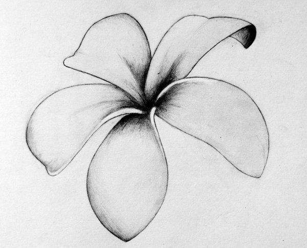 Frangipani Tattoo - The five petals of the frangipani are believed to represent sincerity, faith, devotion, aspiration and surrender.