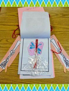 Libro sobre el cuerpo humano.  Se podría hacer cada capa con un sistema o aparato.