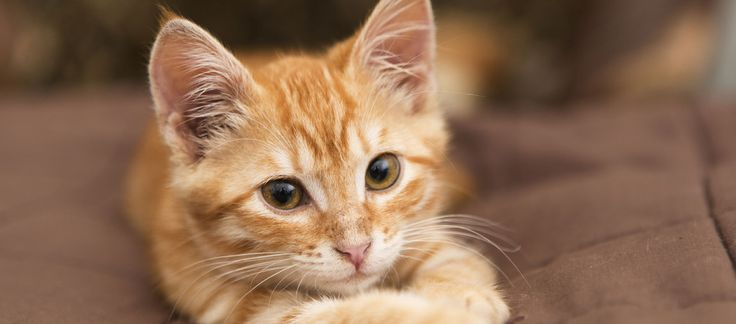 Mission des chats: Si un chat errant entre dans votre maison et qu'il l'adopte comme sa maison, c'est parce que vous avez besoin d'un chat à ce moment