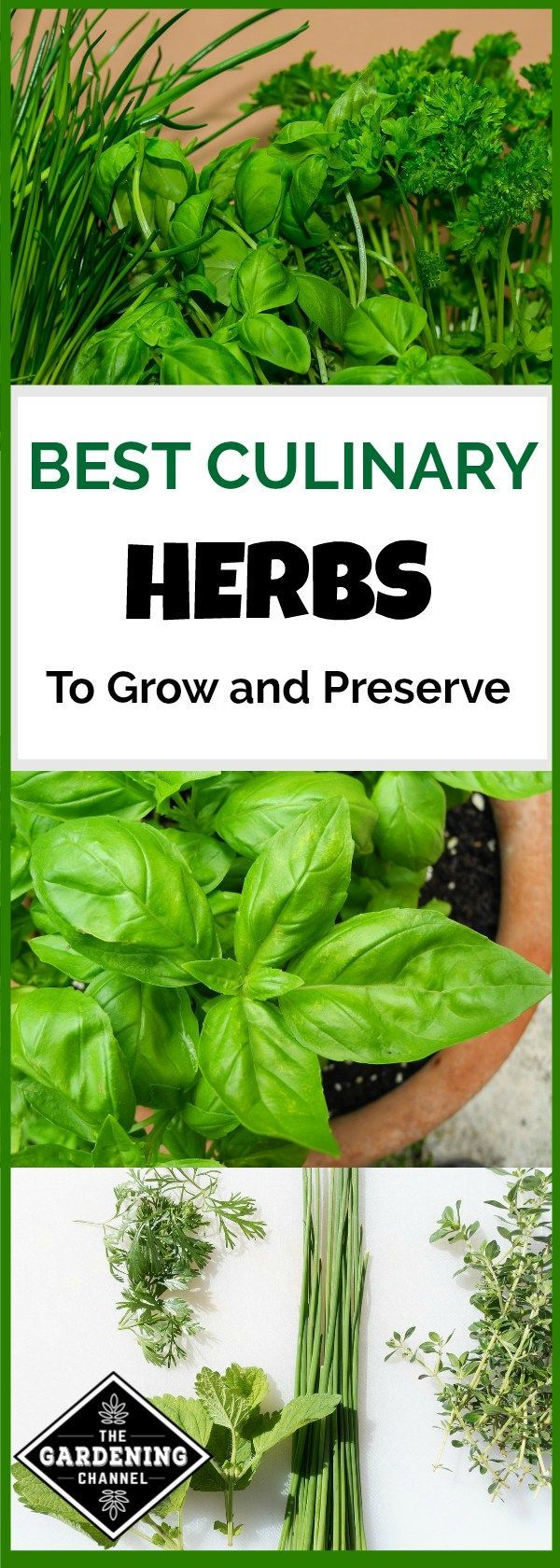 Culinary herbs are leaves and seeds that are used to flavor food. Learn the most popular culinary herbs to grow in your herb garden and how to preserve.