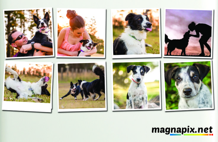 Fridge Magnets, Dogs, Puppies, Sunset, Lassie - Order Now at http://magnapix.net/