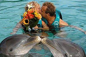 Caribbean vakantie: Trouwen met dolfijnen op de Bahama's
