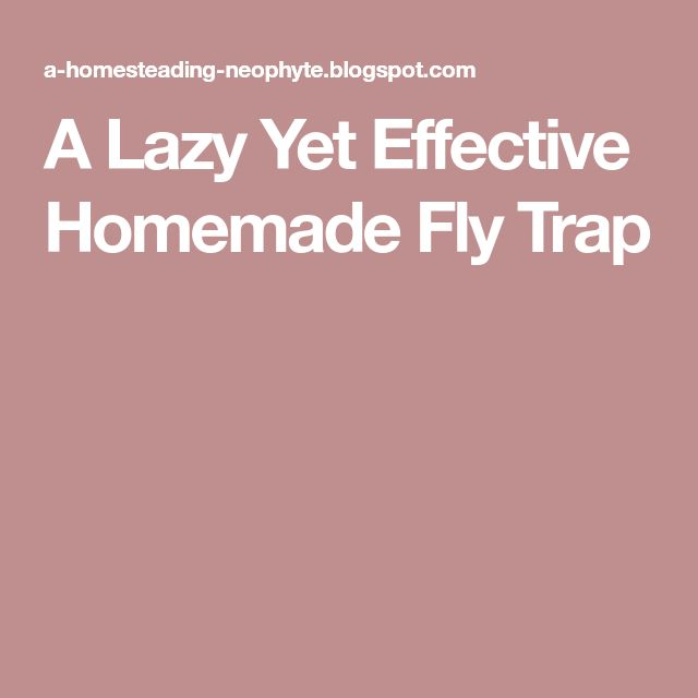 A Lazy Yet Effective Homemade Fly Trap