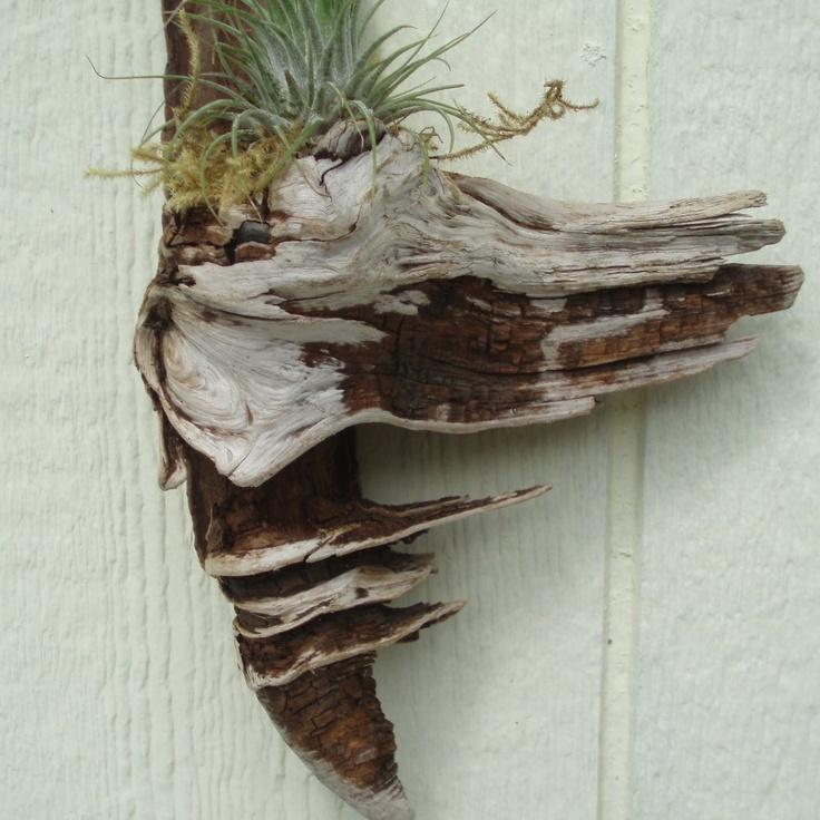 72 best driftwood wall art images on pinterest drift for Driftwood wall decor