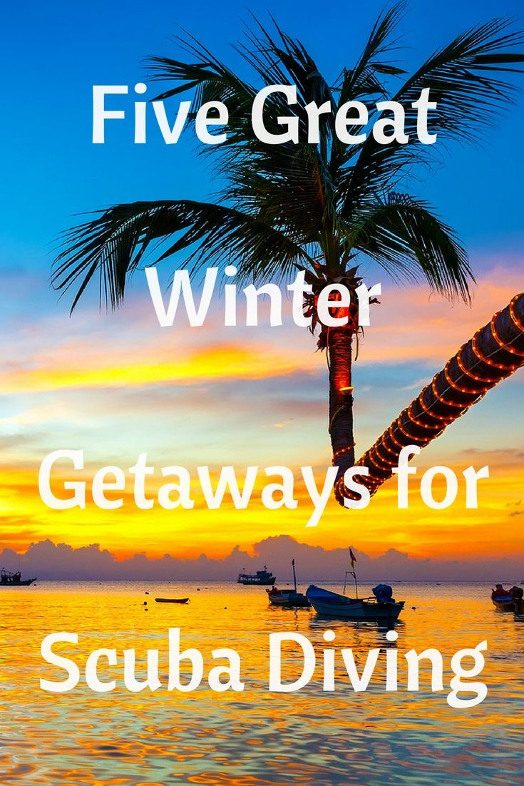 Winter is in full swing, which means you're probably dreaming of somewhere sunny. Book one of these five great winter getaways for diving for the perfect escape.