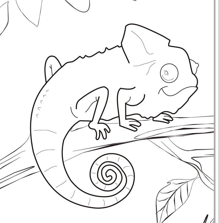 51 best chameleons for creative coloring images on for Mixed up chameleon coloring page