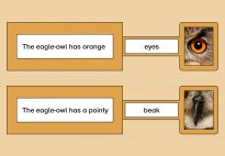 Eagle-Owl Push-and-Pull Cards - Craft Template - Lapbook resources for children in pre-K and kindergarten from KiGaPortal.com