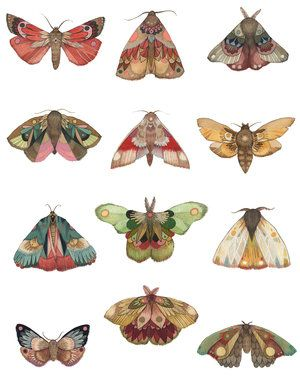 Collector: Moth Series (Special Size) 11″x14″