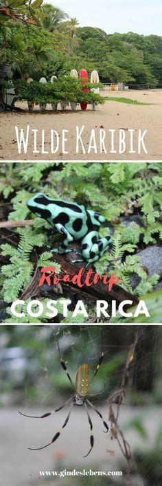 Die wilde Seite der Karibik – Roadtrip Costa Rica Wir verlassen La Fortuna und brechen in Richtung Küste auf, genauer gesagt geht es an die Karibikküste Costa Ricas. Wir fahren über die Bananenhauptstadt Puerto Limón bis nach Puerto Viejo de Talamanca wo wir insgesamt drei Nächte im Dschungel verbringen. Die erste Nacht verbringen wir im Hotel Cariblue. Mitten im Dschungel gelegen, bietet es einen weiteren tollen Einblick in die Tier- und Pflanzenwelt. Riesenspinnen, bunte Frösche und…