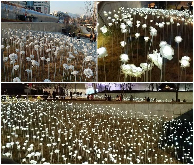 Best South Korea Trip Images On Pinterest South Korea Seoul - 12 things to see and do in south korea