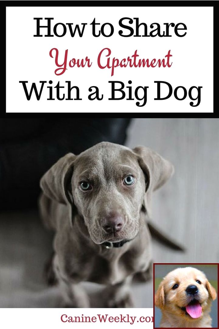 Dog Behavior Signs And The Clicker Dog Training Method Dog