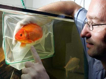 Blo kein glas f r den goldfisch goldfische teich for Goldfischteich pflege