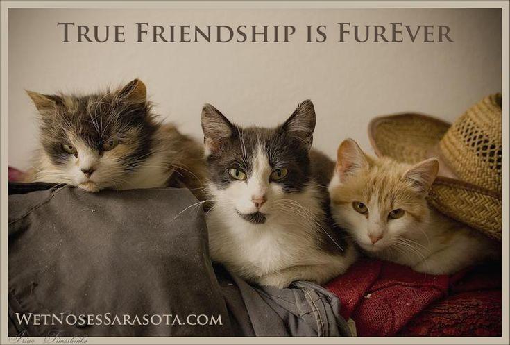 """True Friendship is FUREver"" by Wet Noses Sarasota Pet"