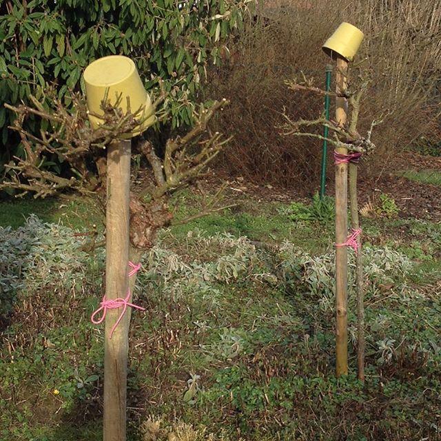 #spring#frühling#garden#garten#nature#natur#naturelovers#roses#rosen#flowers#blumen#rosenstämmchen#gardening#landliebe#meinschönergarten#aufdemland#bauerngarten#gartenglück#gartenliebe#gartenliebhaber#wachstum#gardendesign#gardendecor#gartengestaltung#gardendecoration#gartendeko#gardenstyle#gardenideas#gardeninspiration#joy
